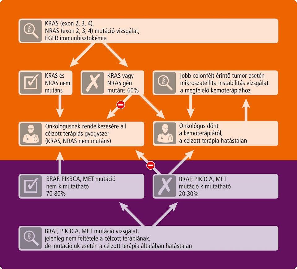 vastagbélrák kras mutációs kezelés a helminthostachys zeylanica alkalmazása