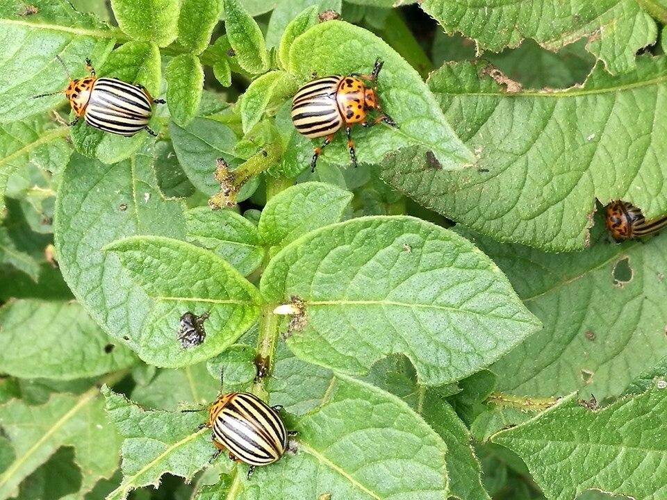 Növényvédelem | Digitális Tankönyvtár