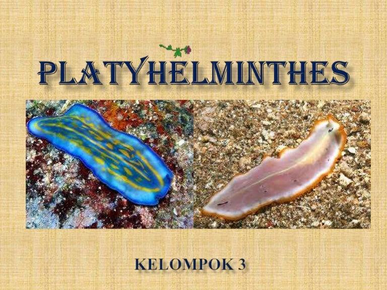 phylum platyhelminthes adalah)