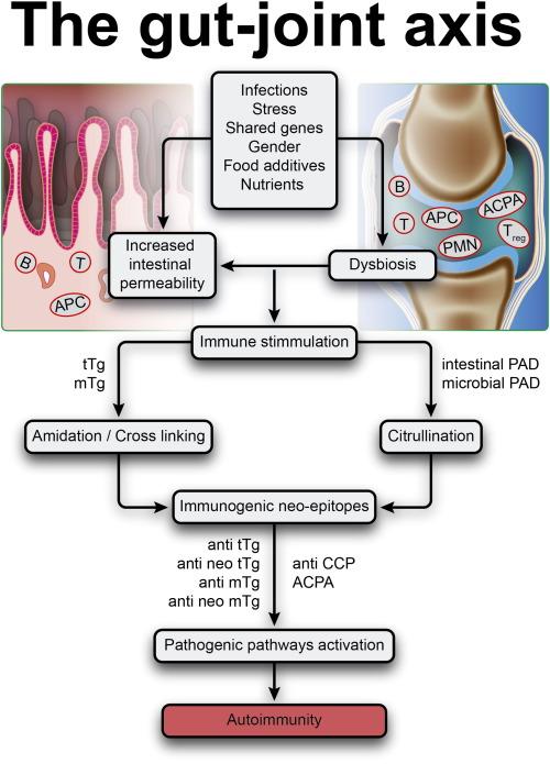 Klinikai vizsgálatok a Diszbiózis
