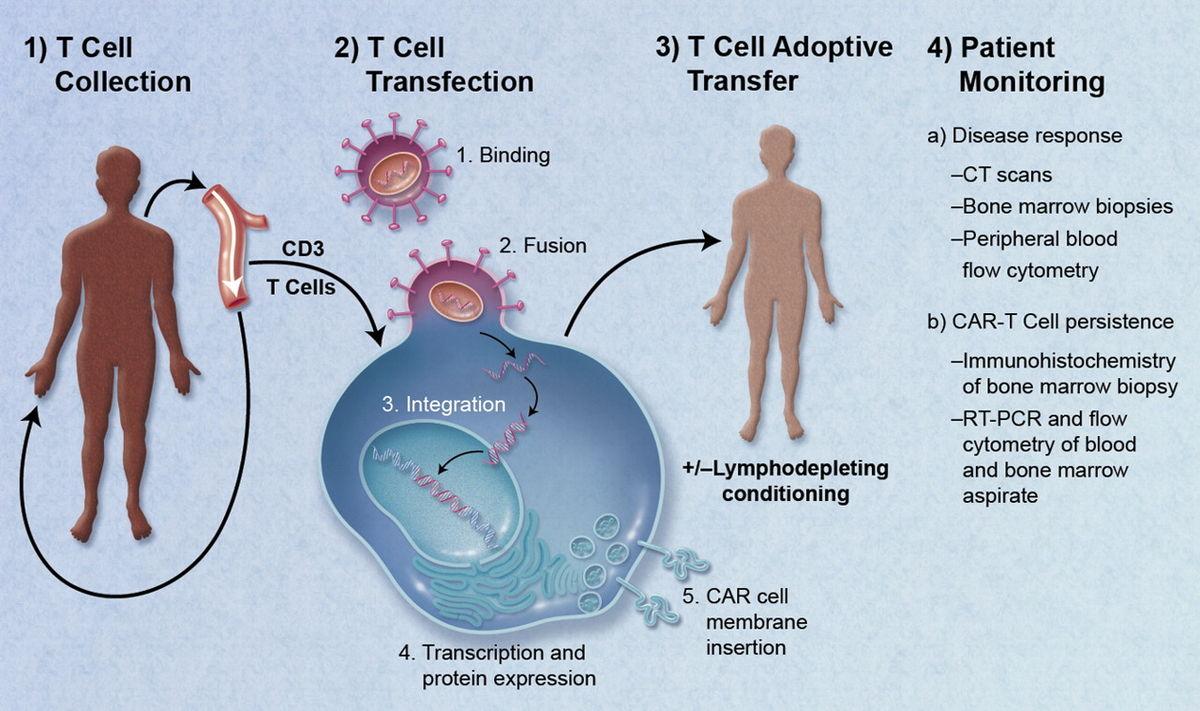 emberi papillomavírus genomika múltja és jövője