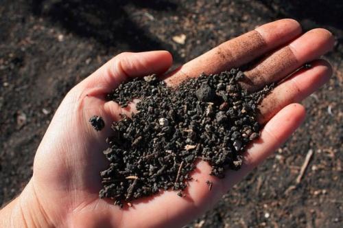 Arundo donax a talajszennyezés ellen