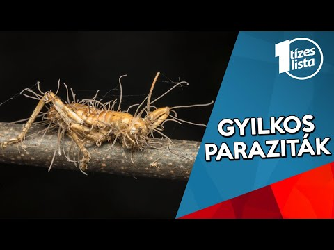 rovar paraziták