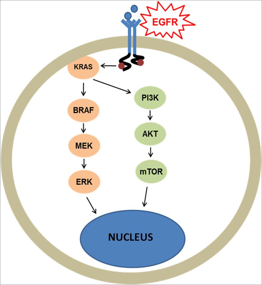 A BRAF mutáció vizsgálata és kezelése — Molekuláris Diagnosztikával a daganatok ellen