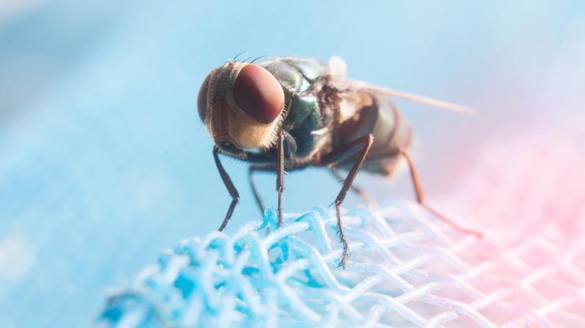 paraziták megelőzése és kezelése