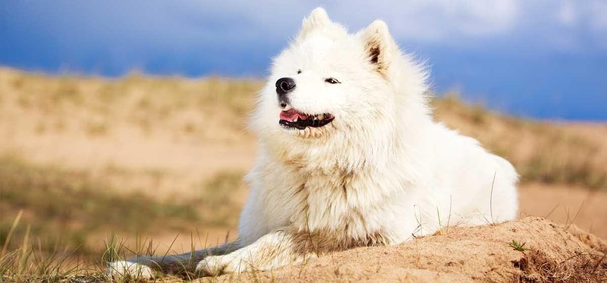 giardia kutyáknál vagyis