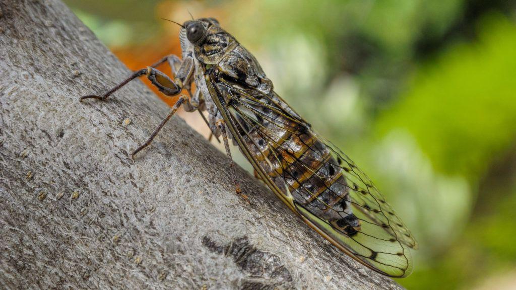 nagy paraziták sok papillóma tennivaló