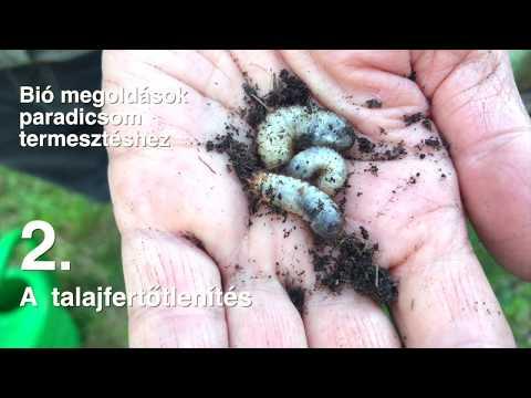 talaj féregtelenítés