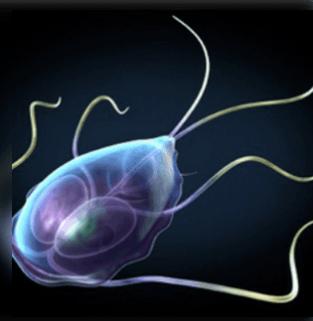 Echinococcosis, Emberi férgek kezelésének típusai - A szubkután férgek tünetei