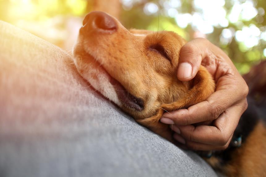 giardia és psow leczenie