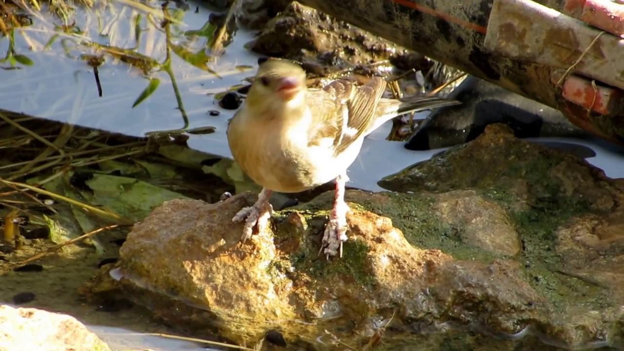 Papillomaviridae - Papillomaviridae - doras.hu
