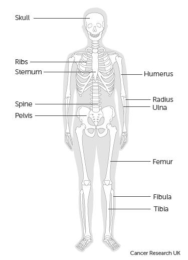 a peritoneális rák elsődleges)