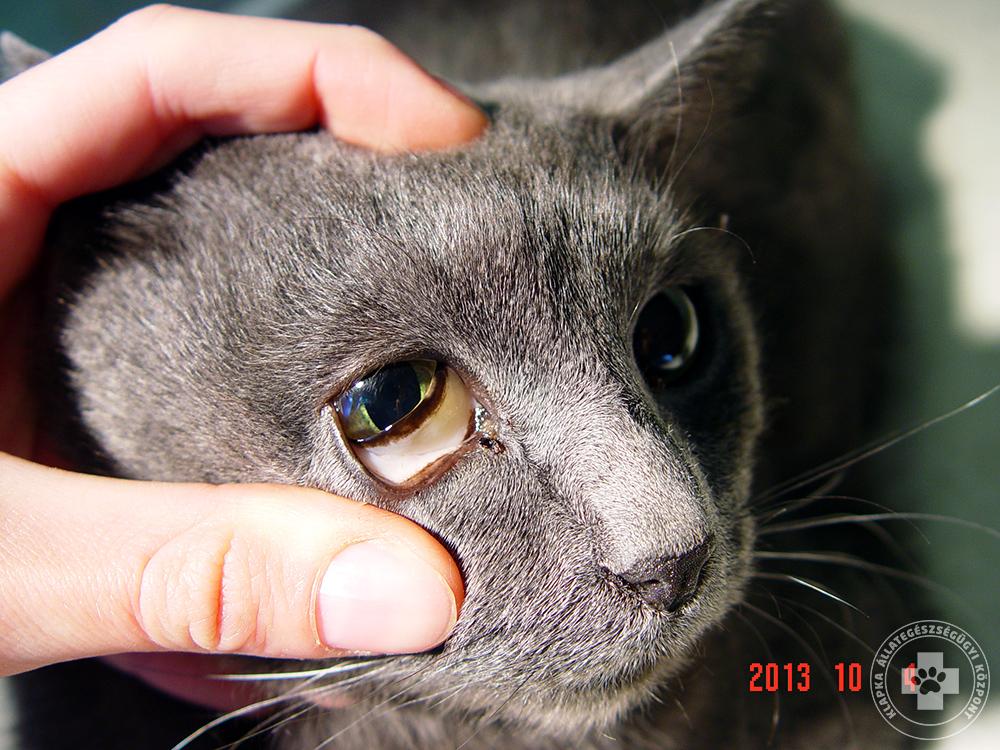 volt a macska tünete