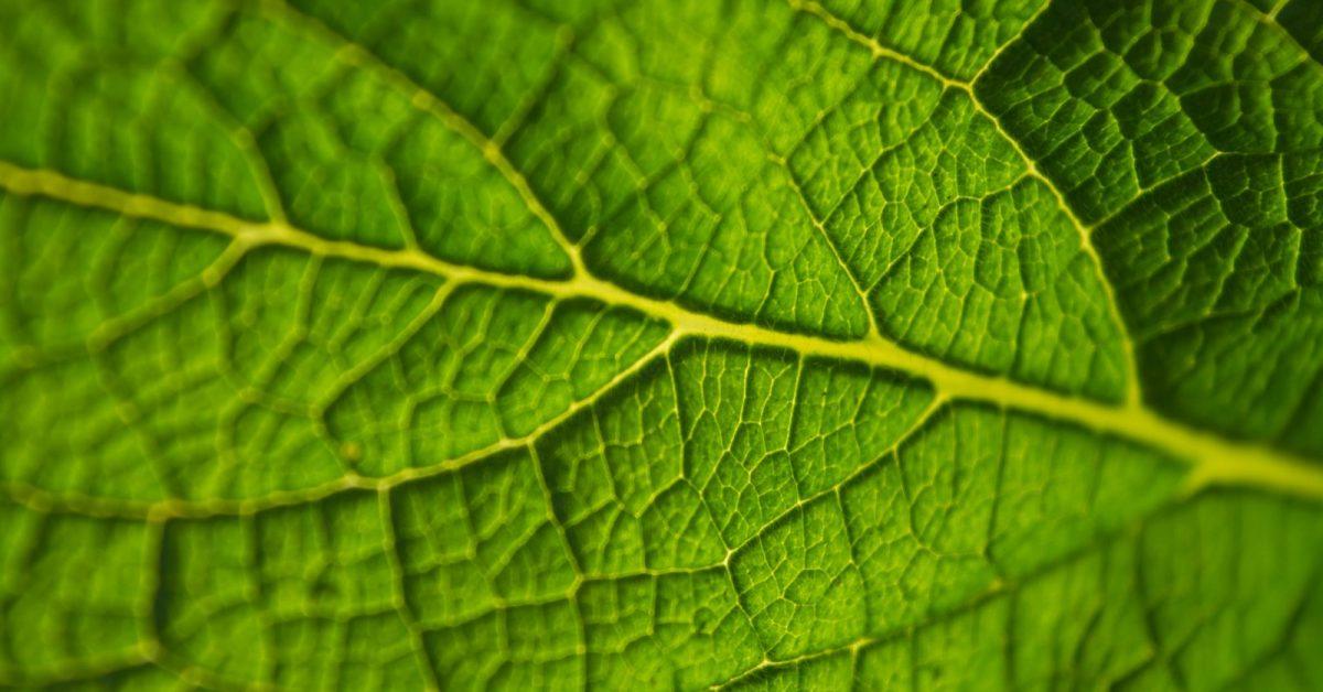 a körömféreg fontossága a természetben