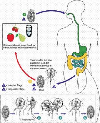 gyógyszer az emberi test letörlése ellen