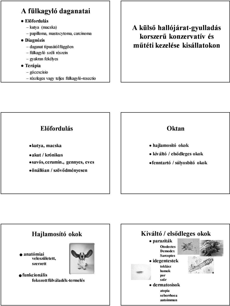 papilloma paraziták kezelése)