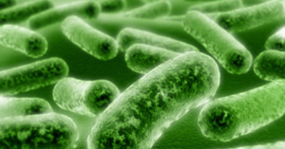 A hasznos baktériomokról – közérthetően