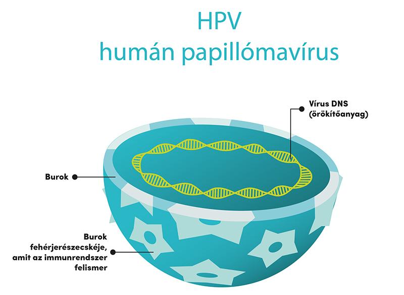 papilloma vírus ember hogyan lehet gyógyítani