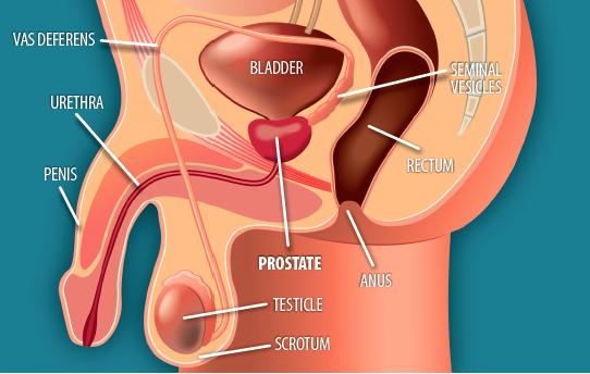 Radikális prostatectomia vs. várakozó álláspont lokalizált prosztatarákban