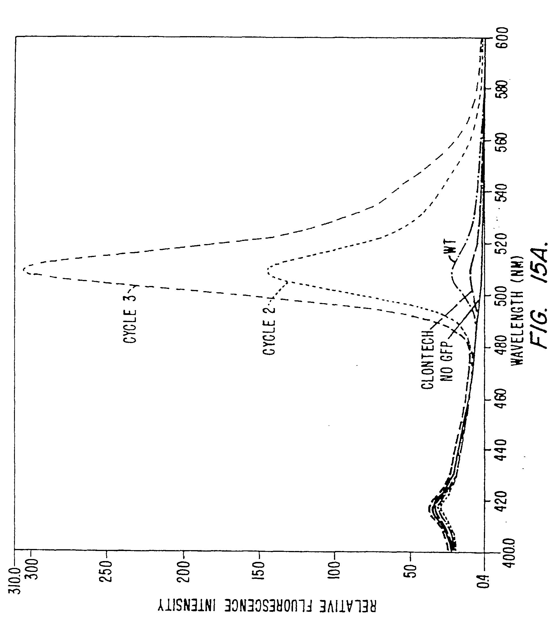 HU221806B1 - Vázon módosított oligonukleotid analógok - Google Patents
