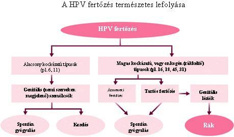 HPV fertőzések és megelőzésük
