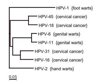 emberi papillomavírus hpv vakcina cervarix))
