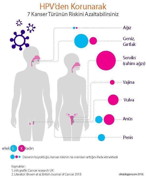humán papilloma vírus nedir belirtileri