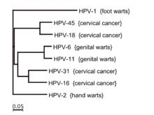 hpv vírus sta je