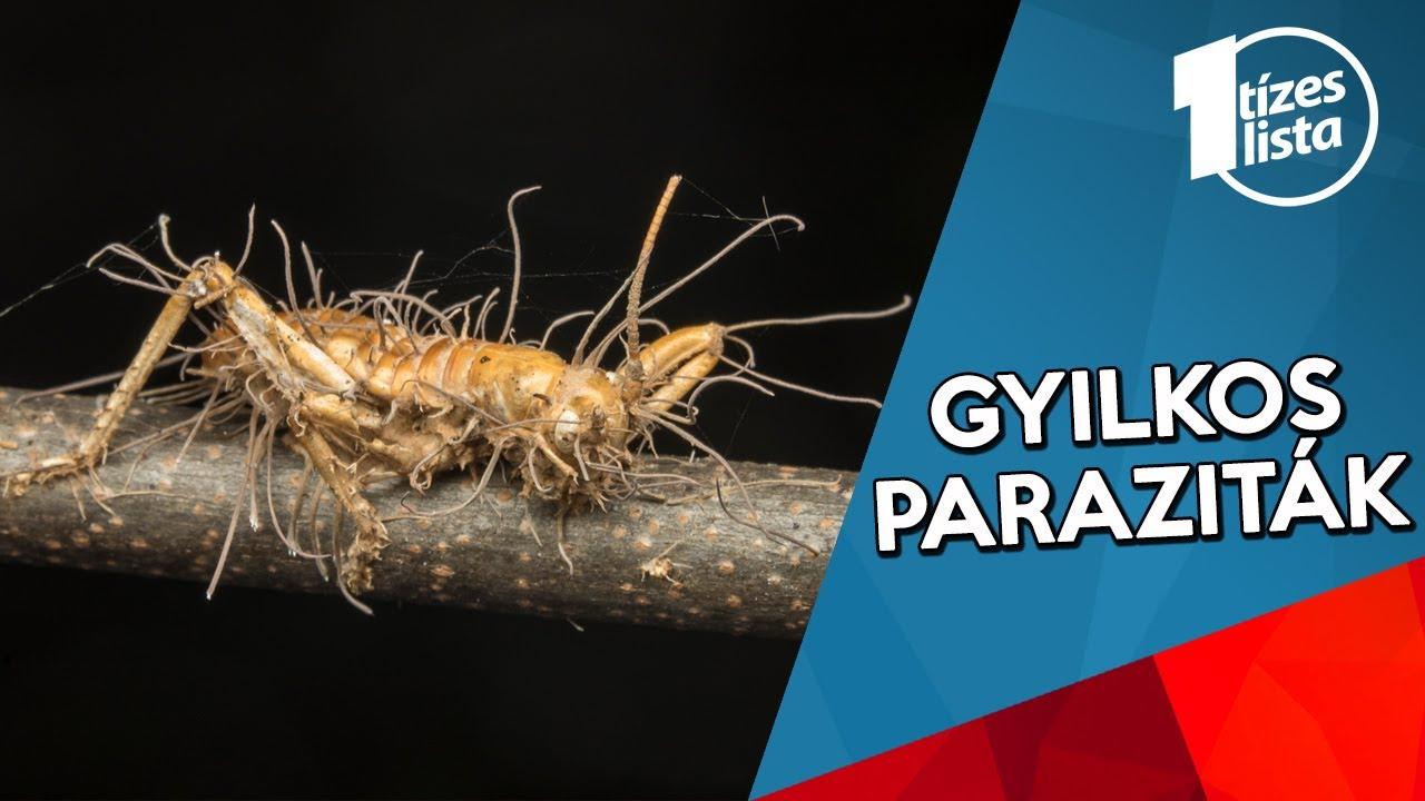 milyen paraziták vannak az emberekben)