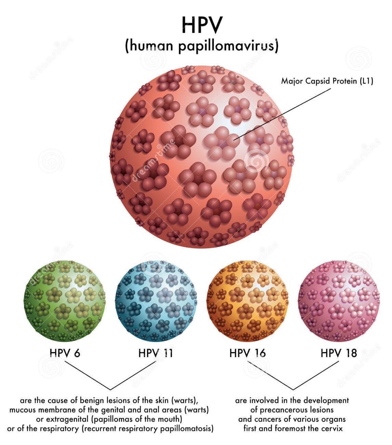 papilloma vírus 6 és 11 típusú