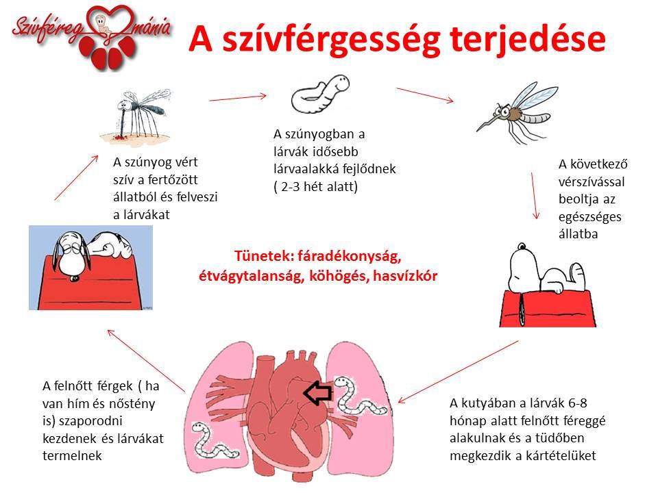 Támadnak a szív-és bőrférgek