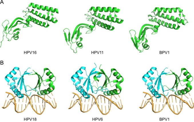 papilloma vírus vírus régió lombardia