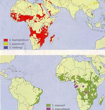 schistosomiasis verbreitung)