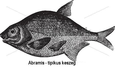 parazitákkal rendelkező halak)