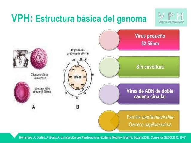 hpv vírus 16. sz)