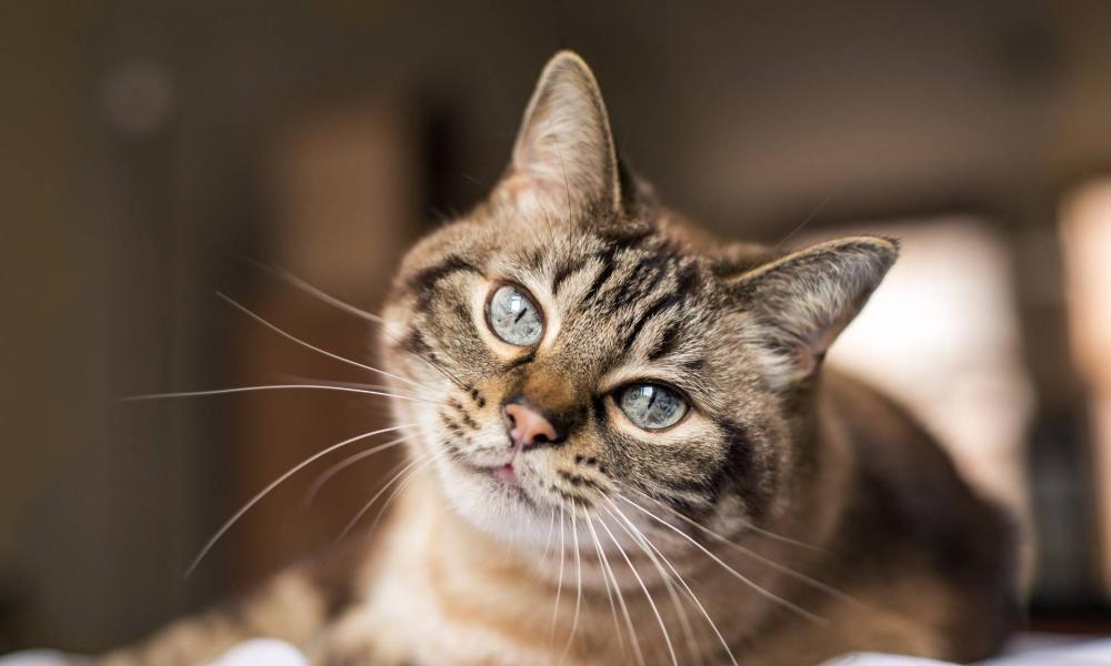 Gyakori macska betegségek, gyakori tünetek