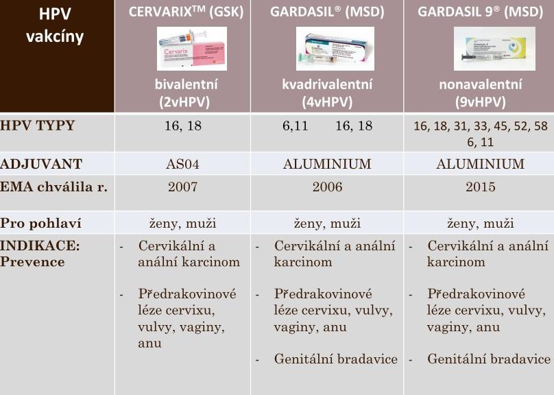 A HPV fertőzés patológiája és megelőzése Dr. Szentirmay Zoltán