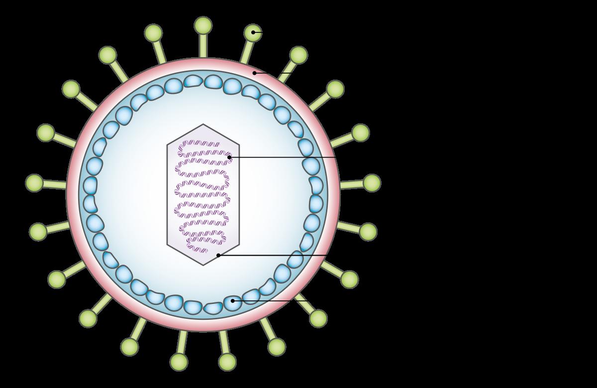 papilloma vírus magas onkogén kockázattal jár gyomorrák fizikai vizsgálat