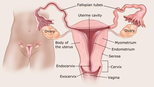 endometrium rák menopauza