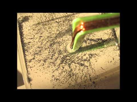 Szívférgesség Emberi pinworm életciklusa