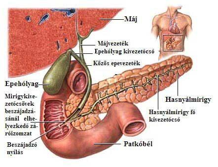 Vastagbélrák máj és hashártya áttét (jelige: koko)   Rákgyógyítás