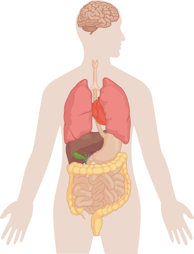 Az emberi test legbonyolultabb része - HáziPatika