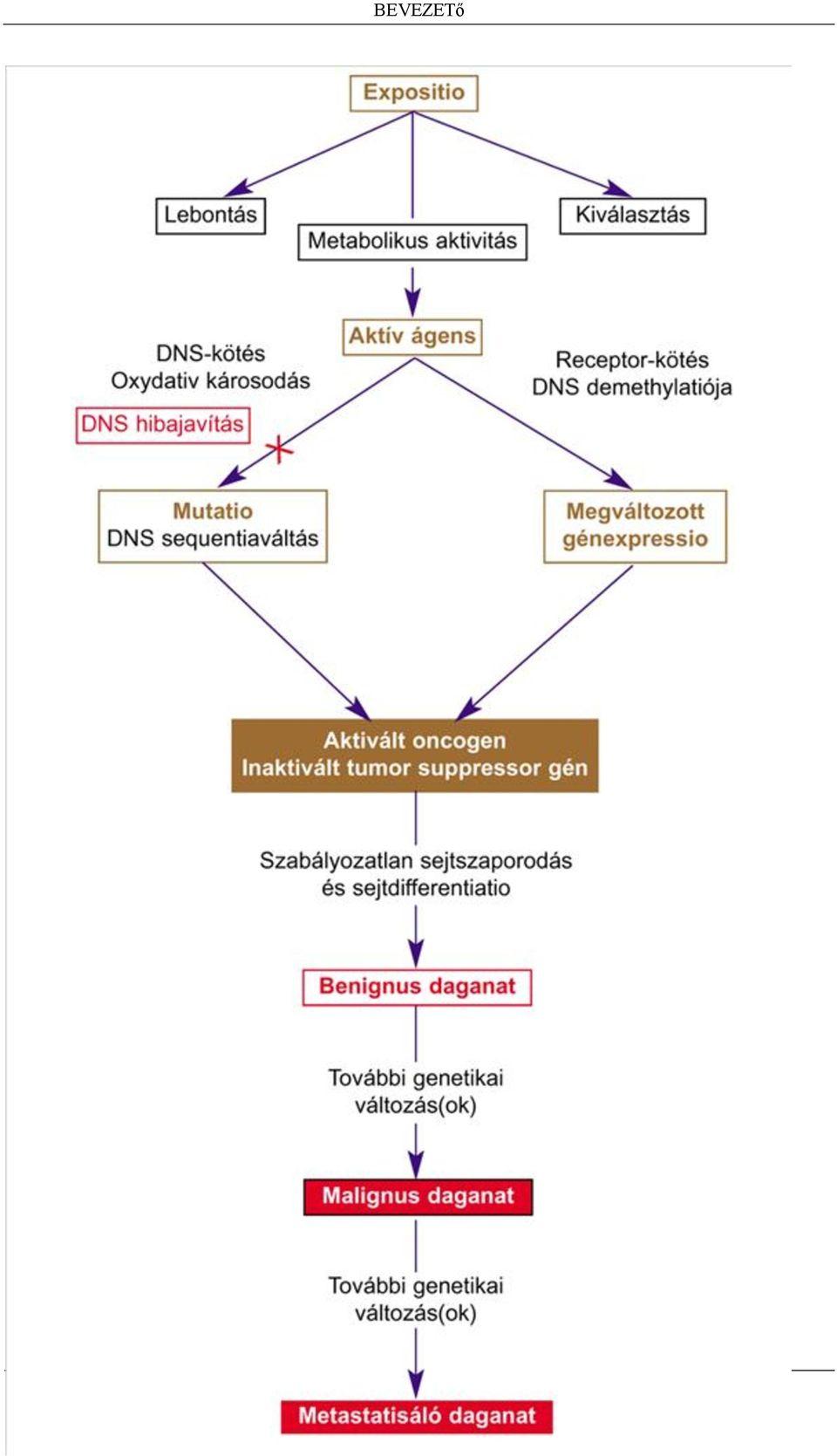 peritoneális rák örökletes