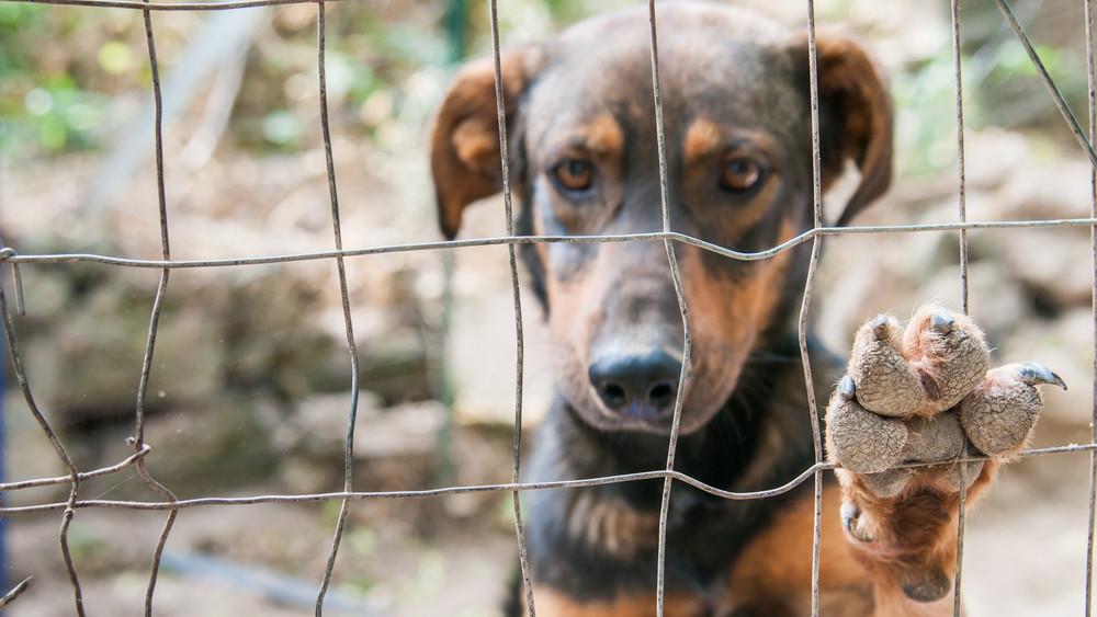 Hontalan kutyákért kampányol az Airbnb