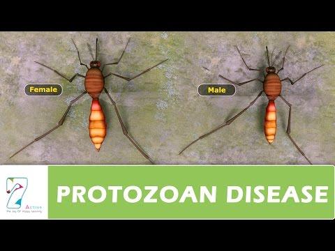 példák a protozoon paraziták