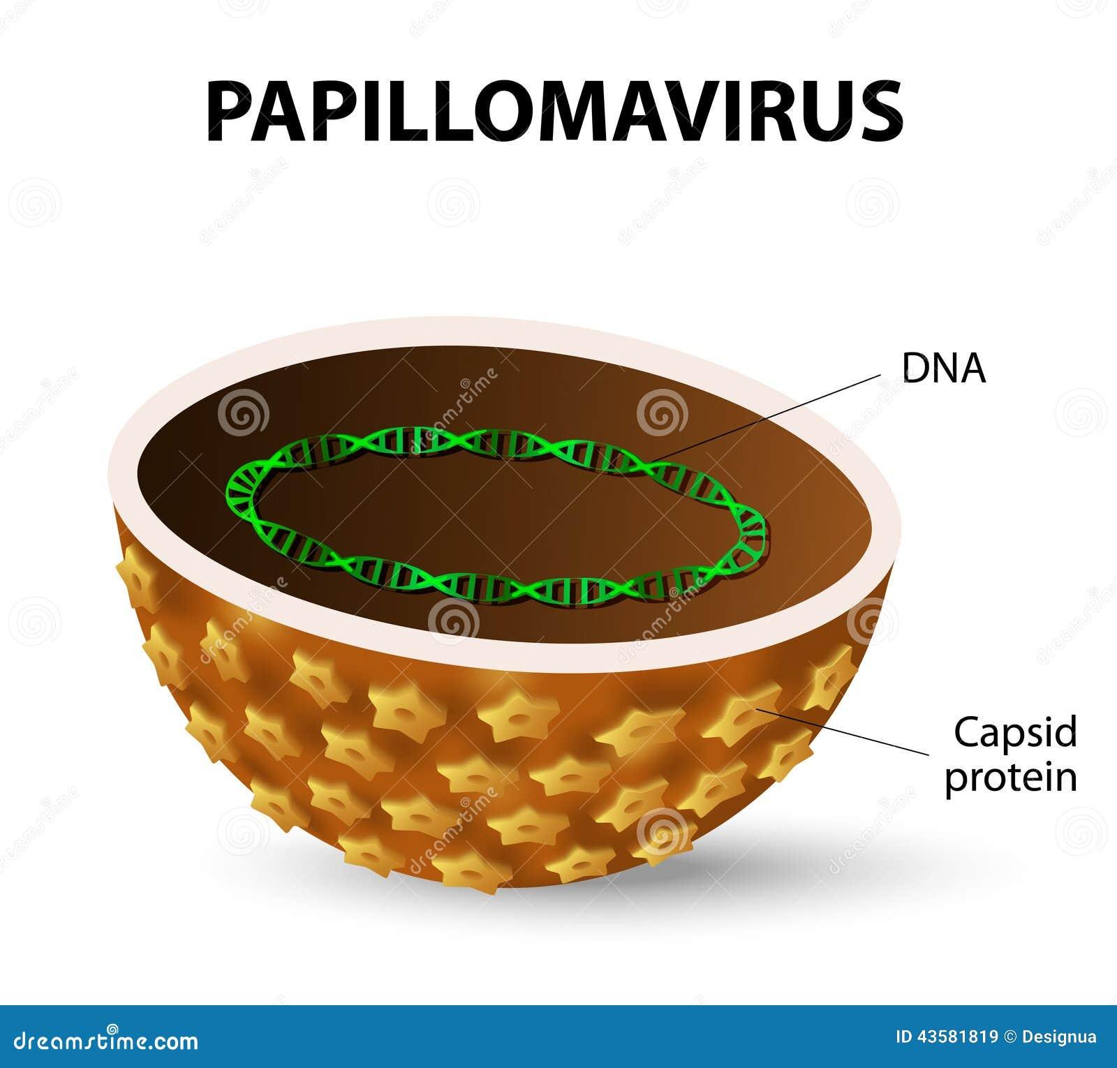 papillomavírus vírusfertőzés