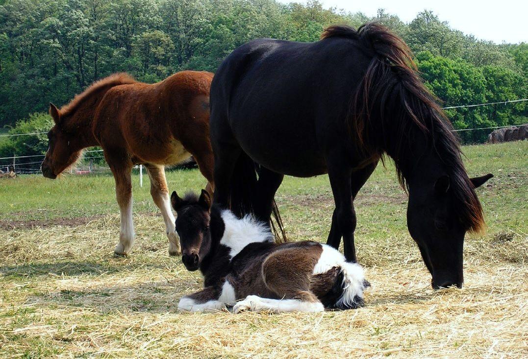 A lovak belső élősködőiről