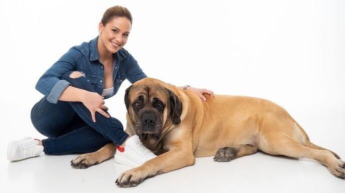 kutyakert és fertőző
