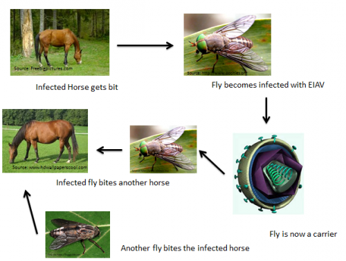 intézkedések a helminták okozta betegségek megelőzésére pillangó zeugma luxus