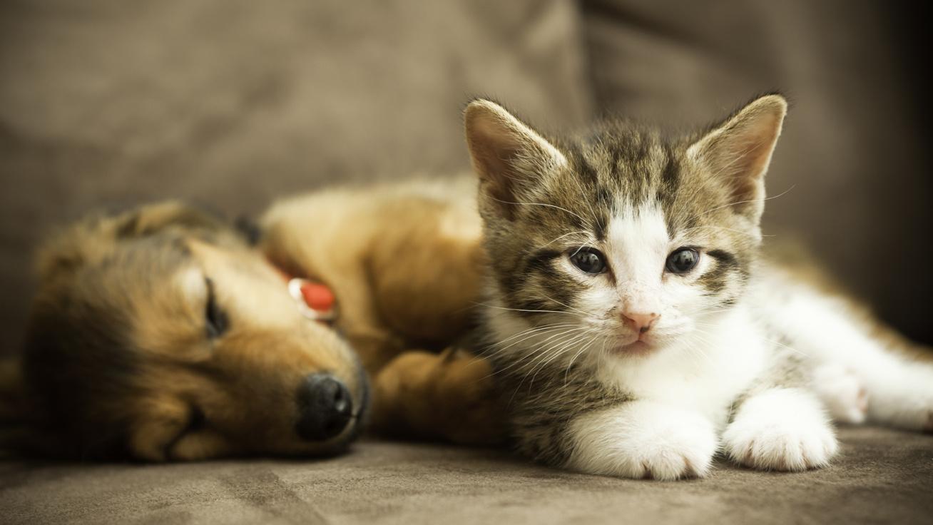 Vigyázat, emberre is veszélyes az egyre terjedő állatbetegség!